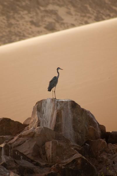 Nile bird life