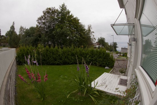 15mm view of the garden