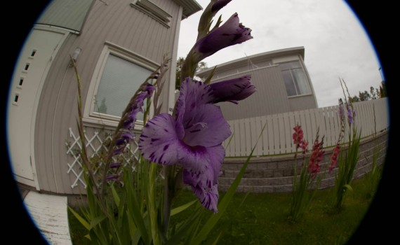 8mm view of the garden