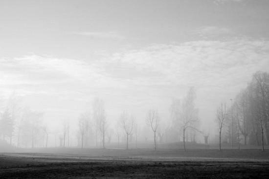 Spring fog