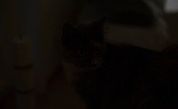 Simulated darkness – ISO 102.400
